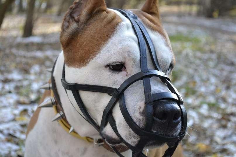 Какие собаки должны носить намордник по закону рф